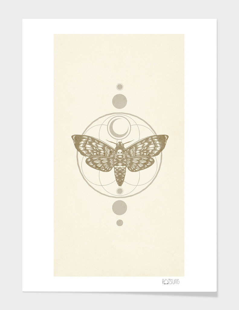 Moth's Wings