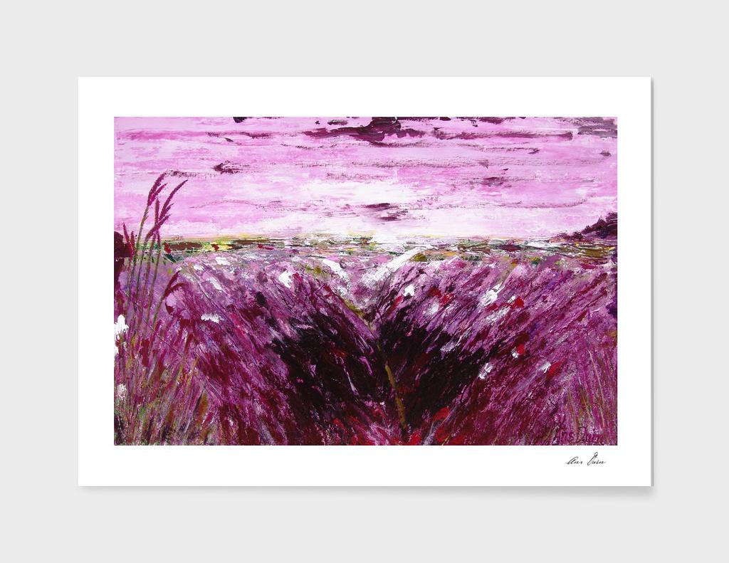Purple lavender landscape