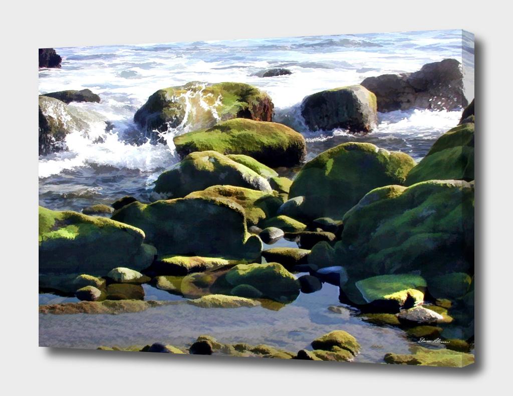 Coastal Tidepools