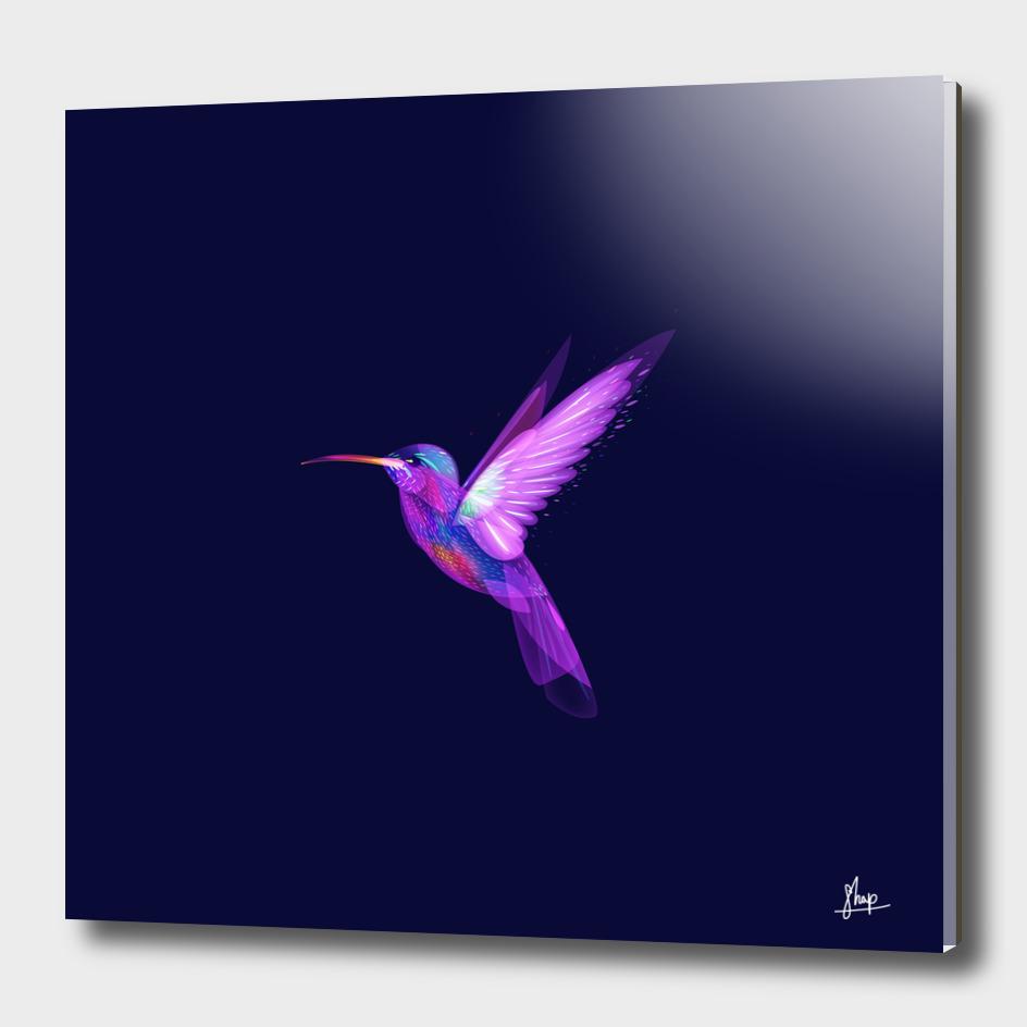 Colibri's dream 1