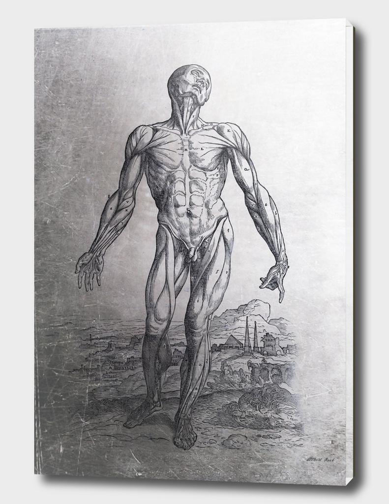 Renaissance Anatomic Pannel p210