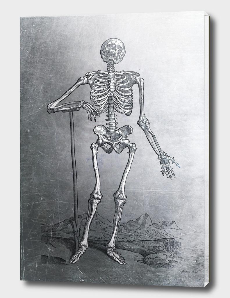 Renaissance Anatomic Pannel p203