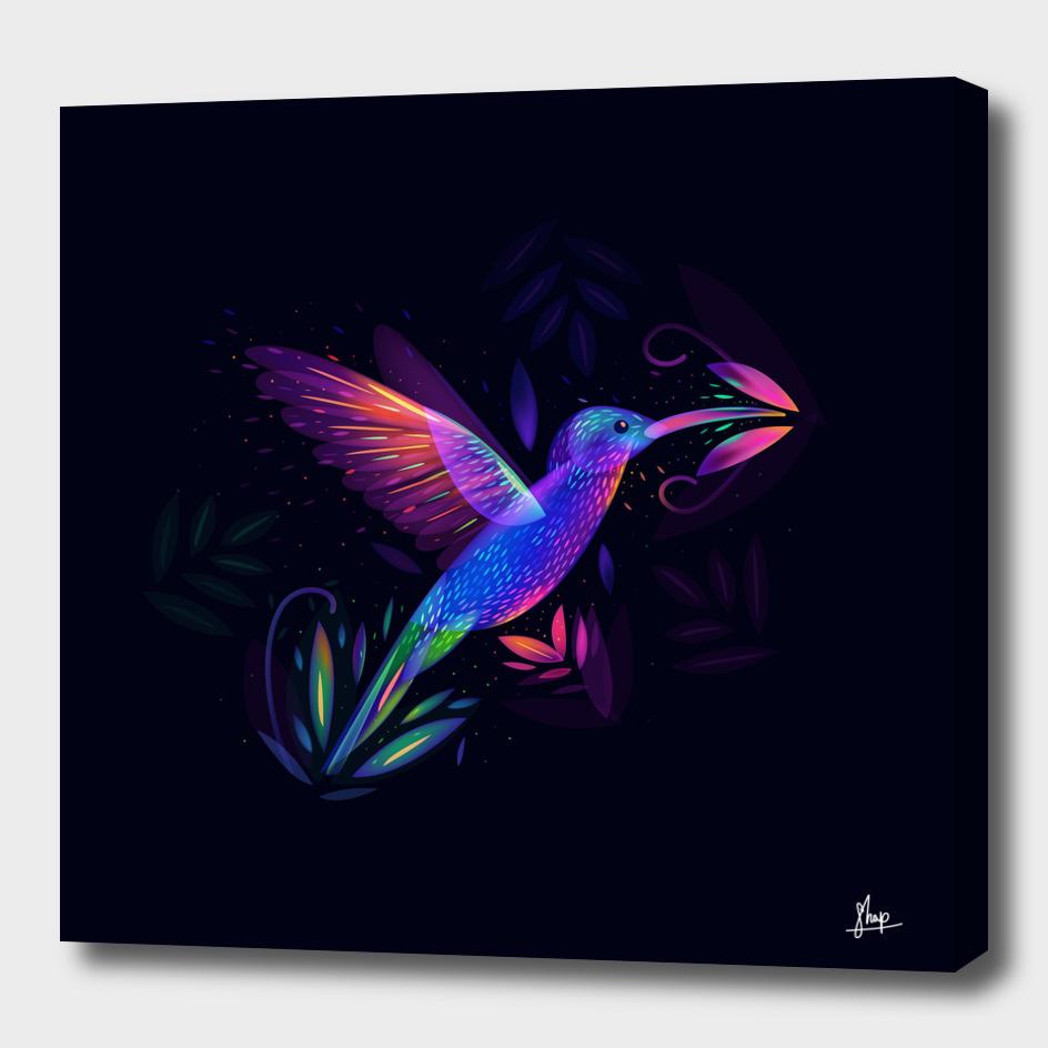Colibri's world