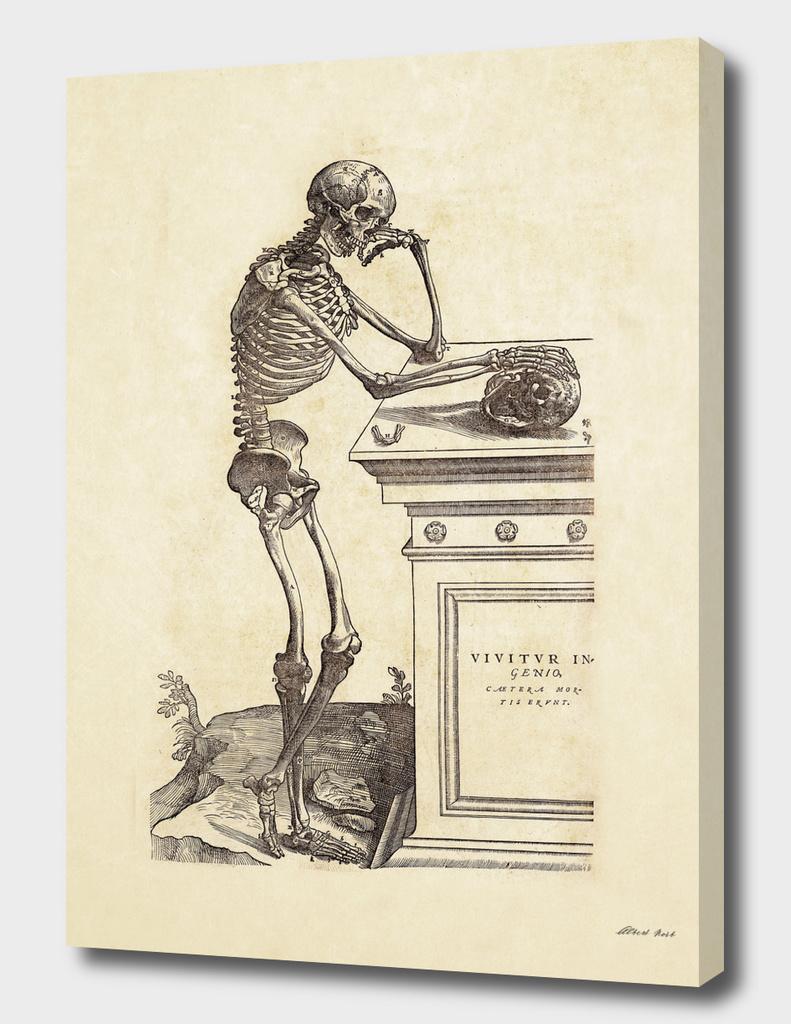 Renaissance anatomic pannel 204