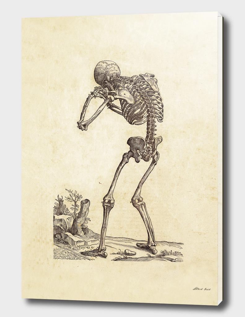 Renaissance anatomic pannel 205