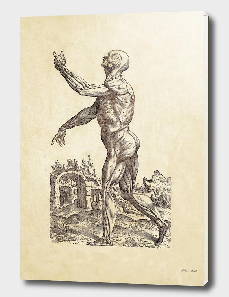 Renaissance anatomic pannel 214