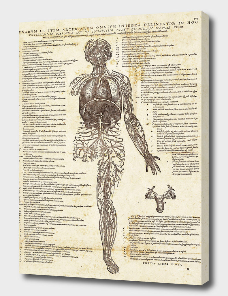 Renaissance anatomic pannel 505