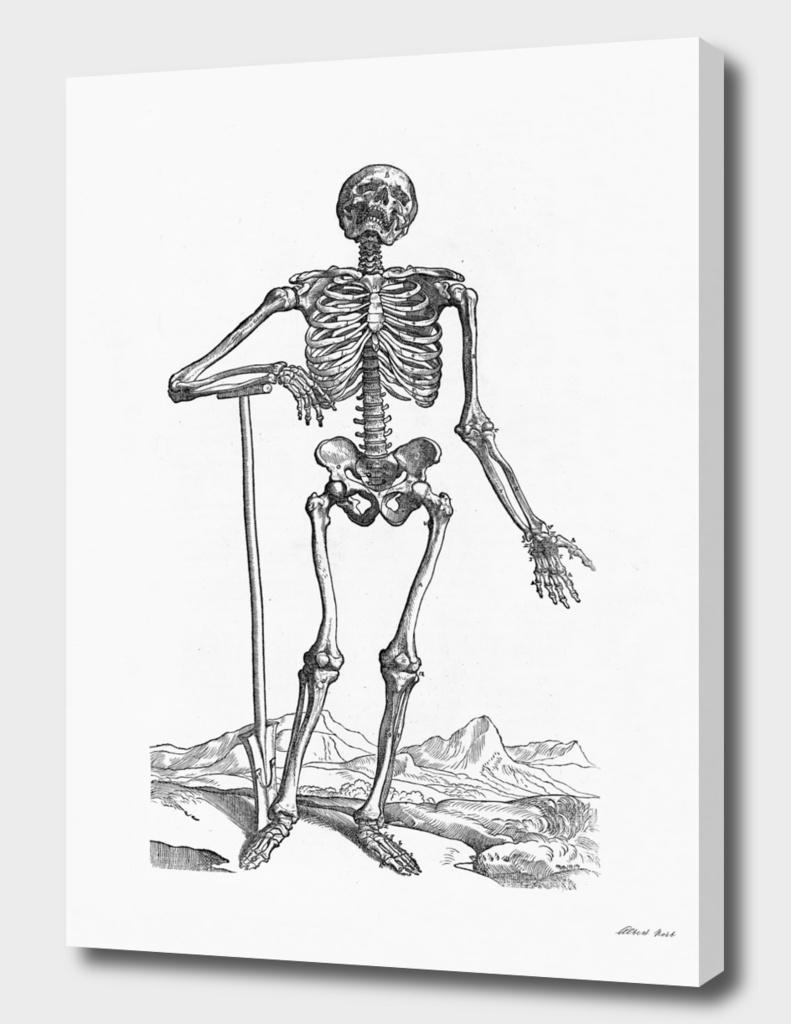 Renaissance anatomic pannel bw 203