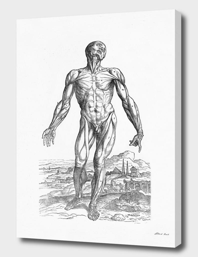 Renaissance anatomic pannel bw 210