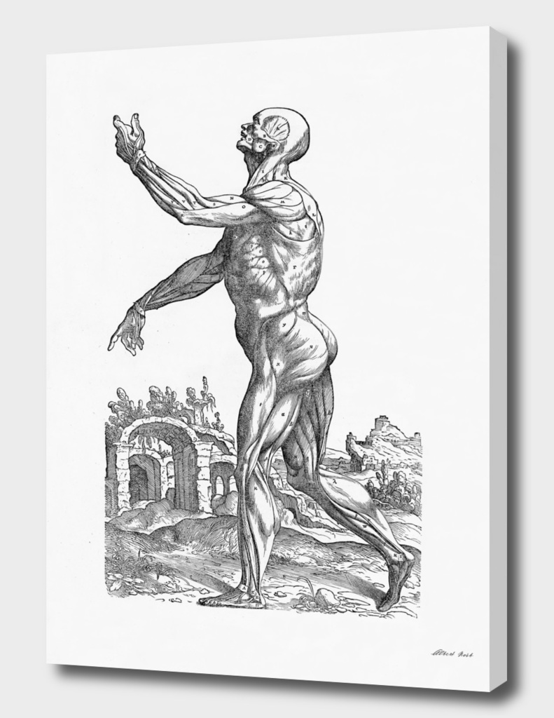 Renaissance anatomic pannel bw 214