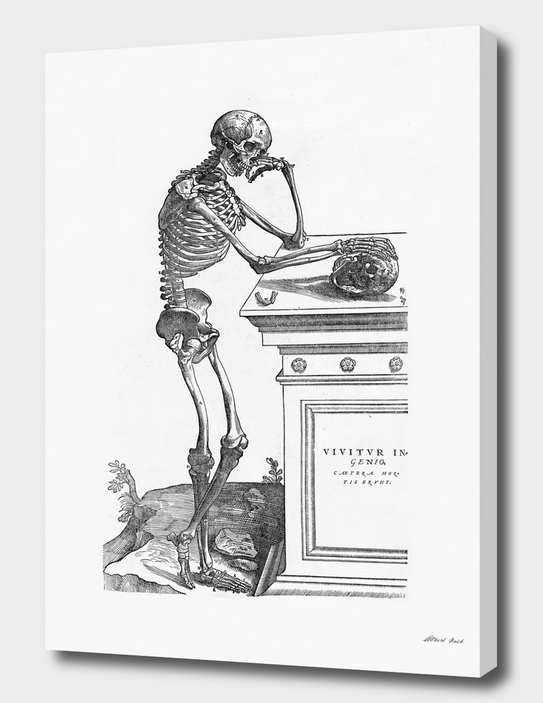 Renaissance anatomic pannel bw 204