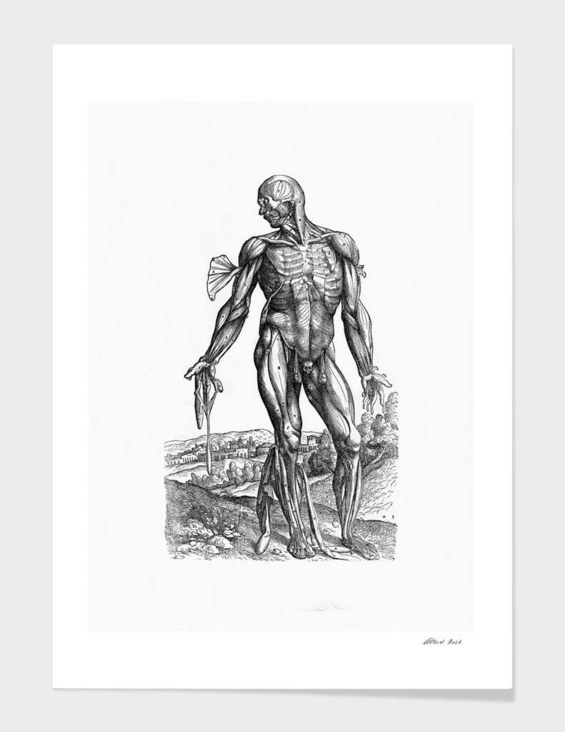 Renaissance anatomic pannel bw 221