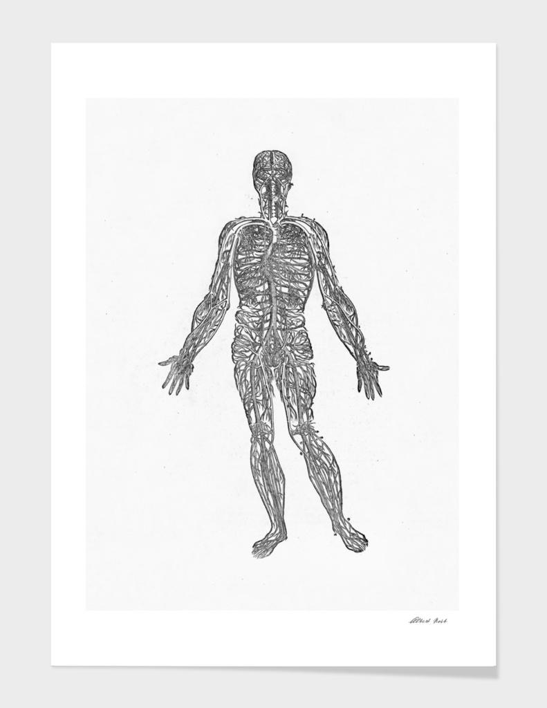 Renaissance anatomic pannel bw 450