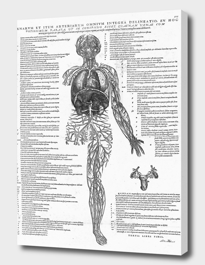 Renaissance anatomic pannel bw 505