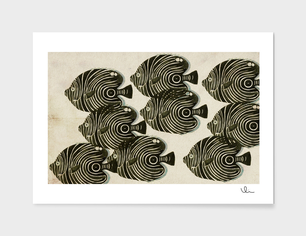 Shoal of Black Fish