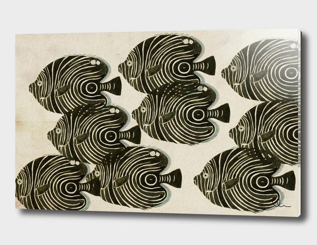 Shoal of Black Fish