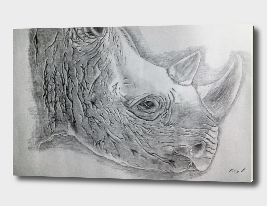 West African black rhino