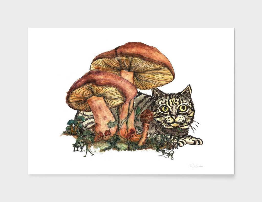 Mushroom and Cat