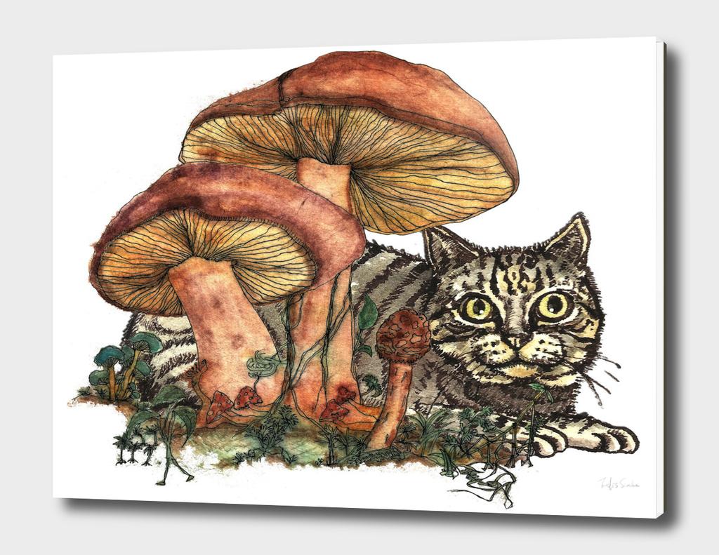 Mushroom and Cat