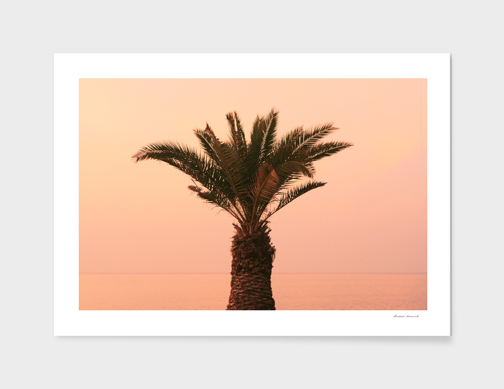 Izola, Slovenia - palm tree on the promenade at sunset