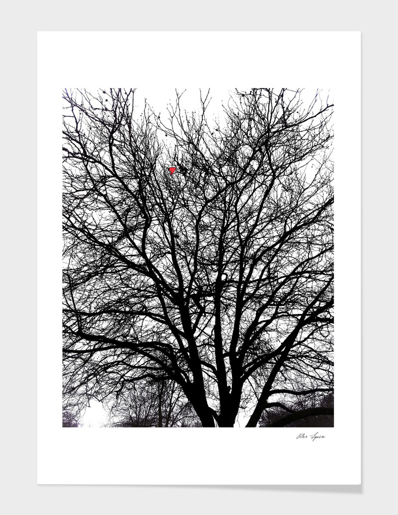 A Weeping Tree in Winter