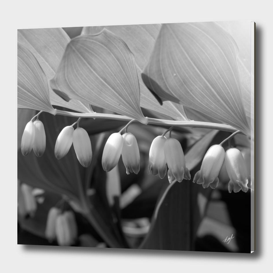 White Bells Flower