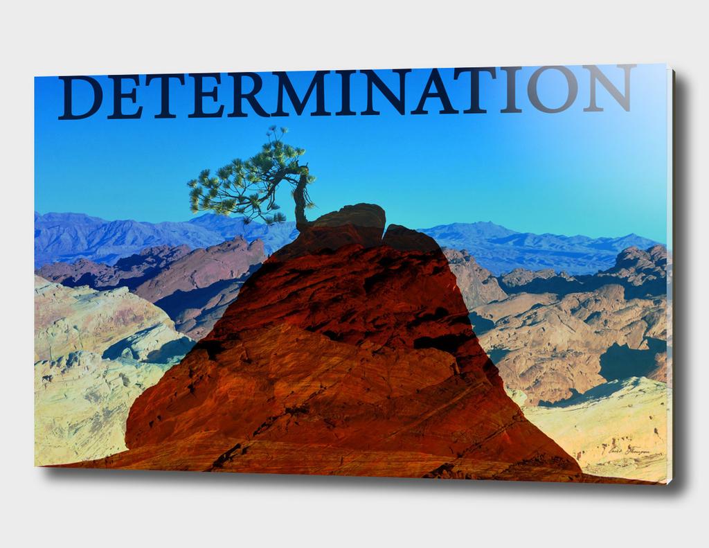 Determintaion