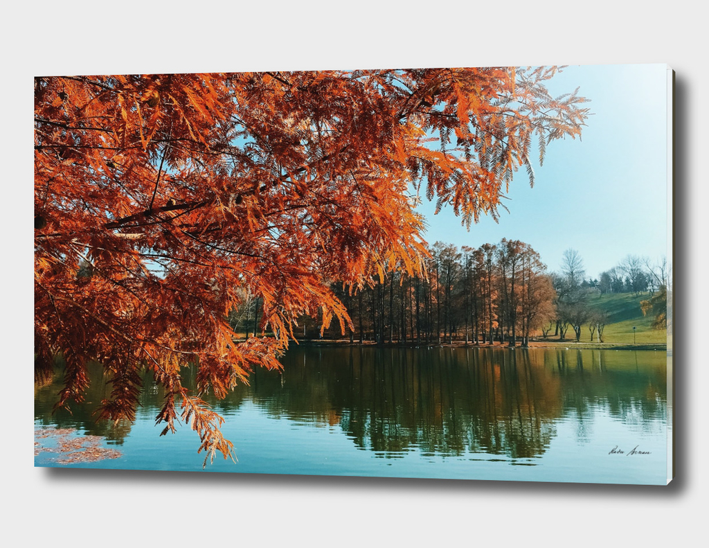 Yellow Autumn Tree On Lake Water With Reflection