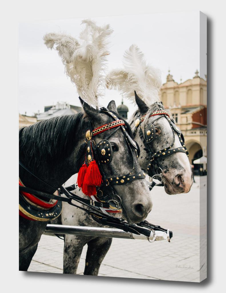 Krakow Horses