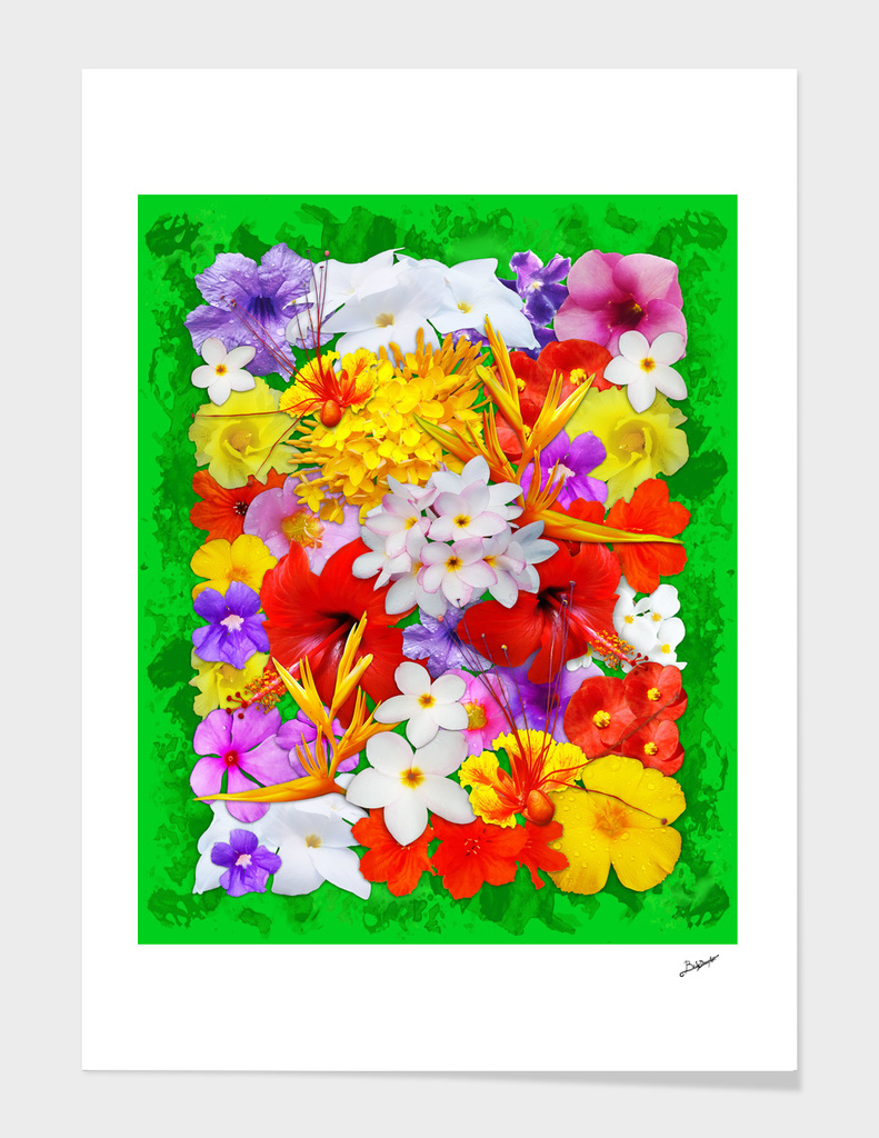 Exotic Flowers Colorful Explosion