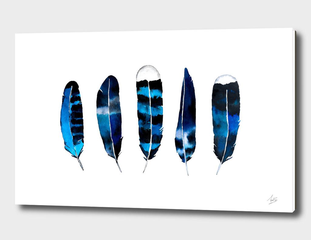 Sea Feathers
