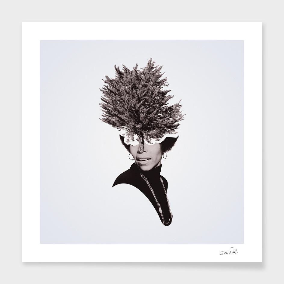Tree People – Rosalind