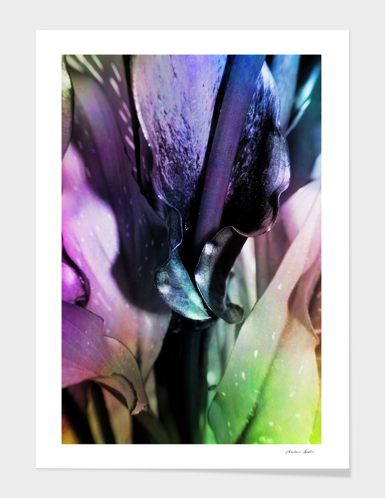 colored calla leafs