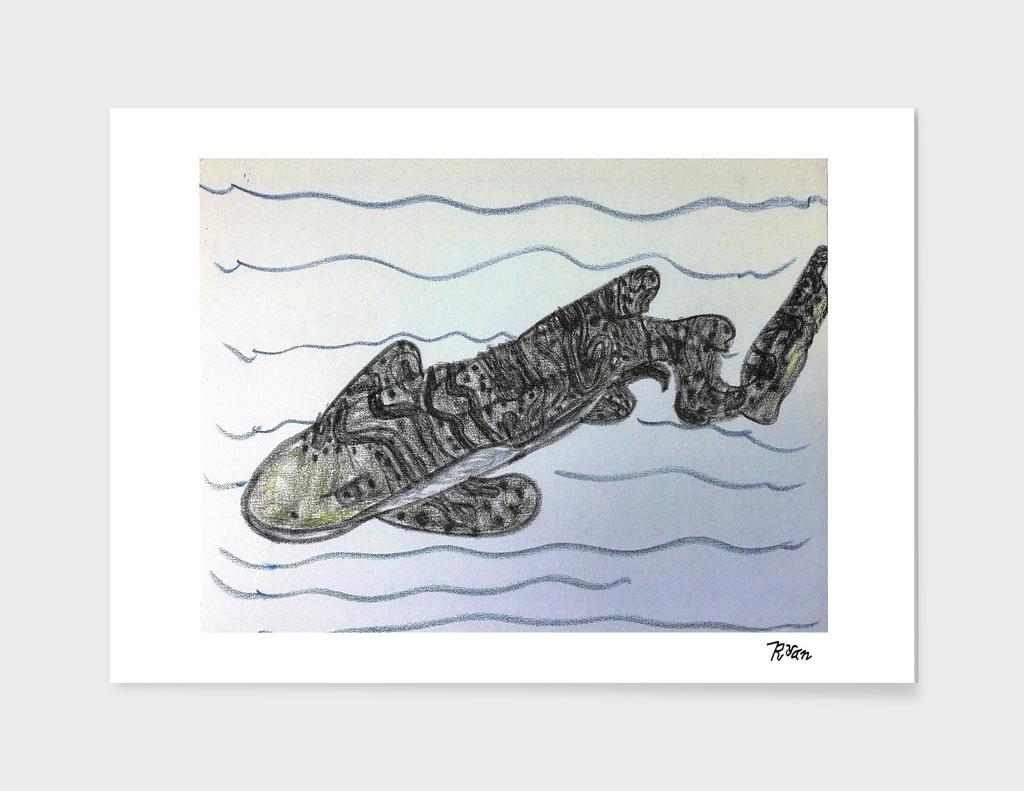#3. Zebra Shark