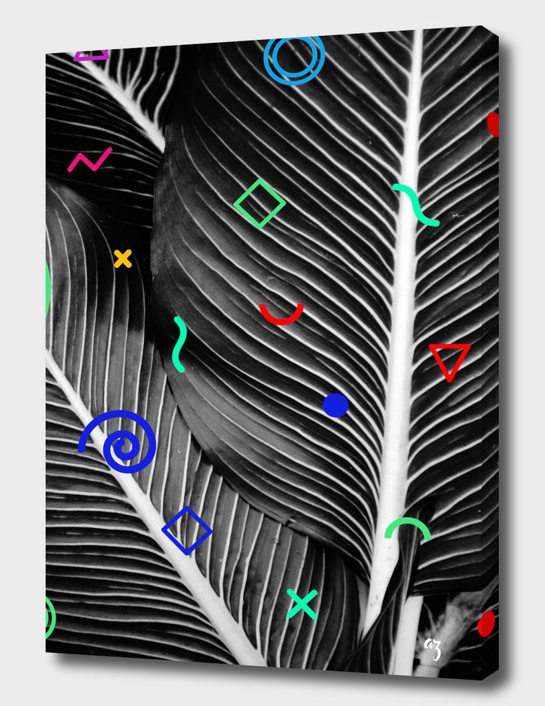 palm corn
