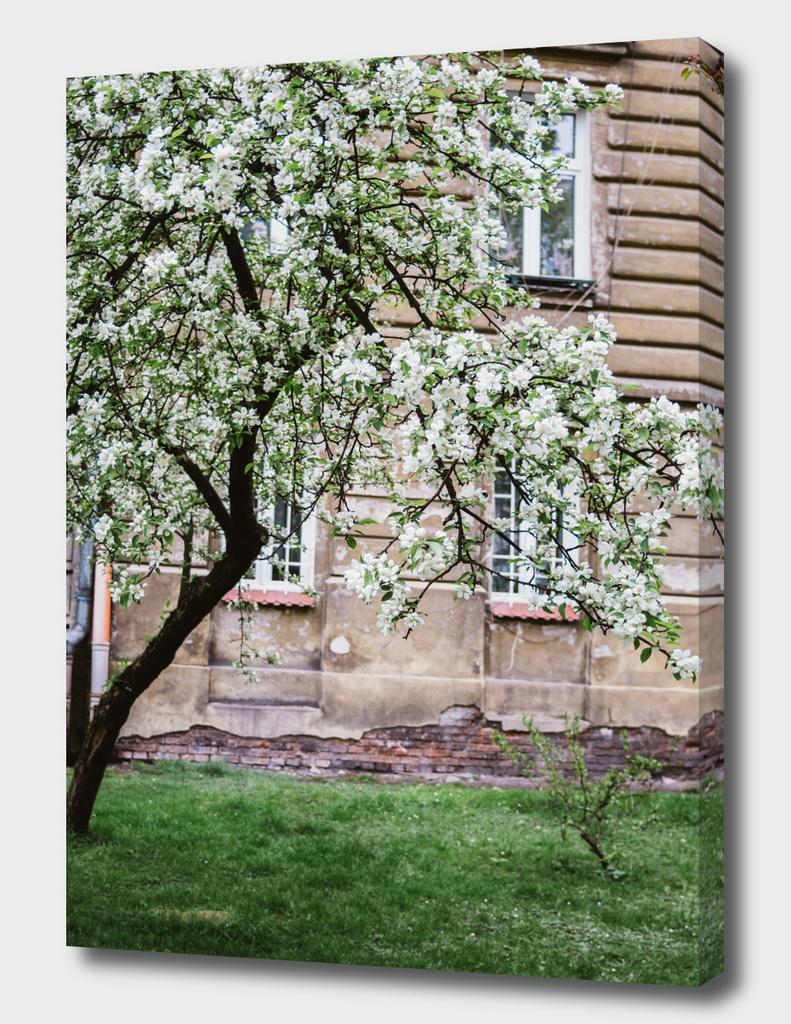 City Spring Tree