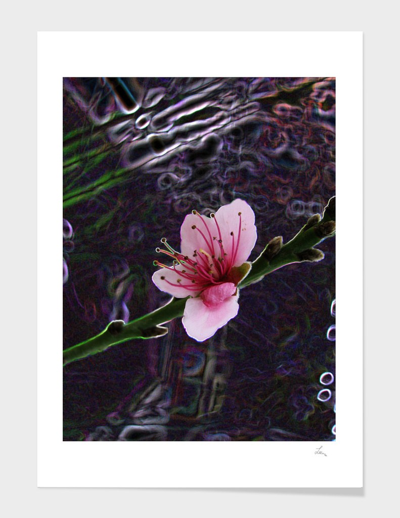 pink flower on the dack background
