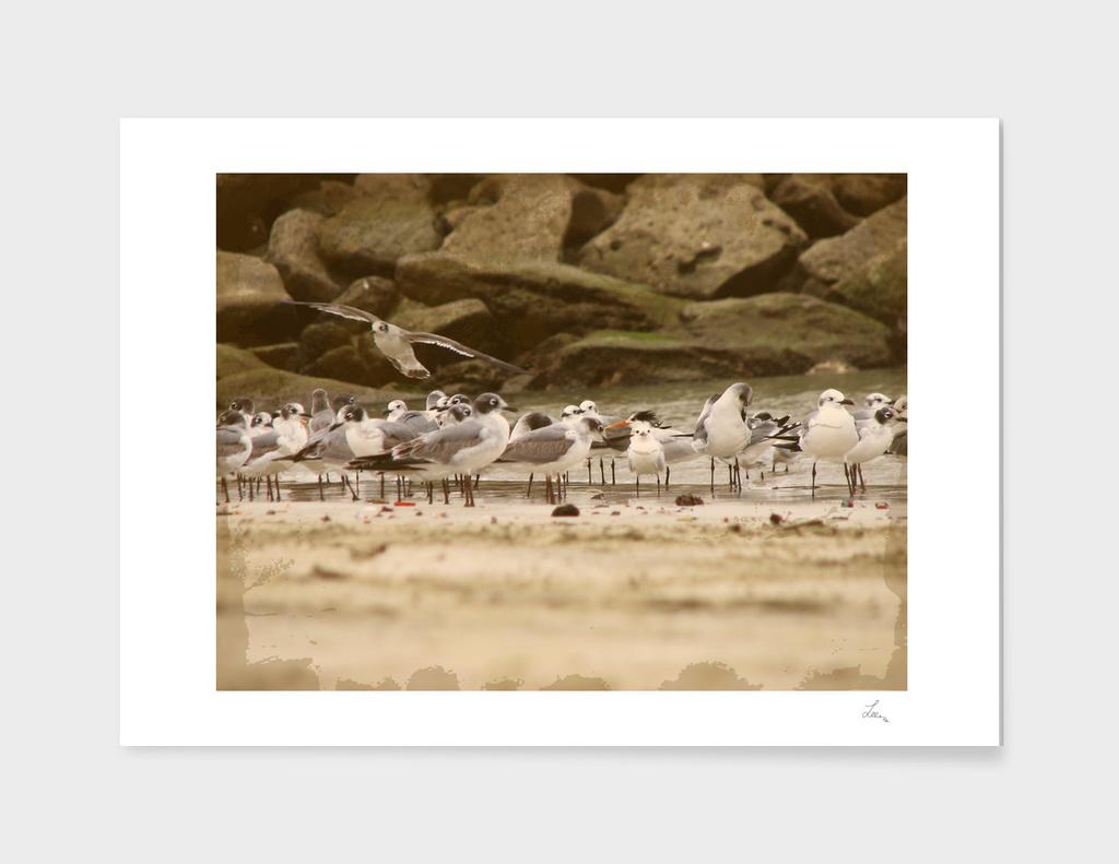 seagulls and rocks