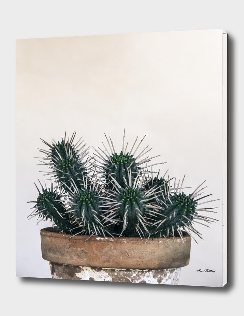 Cactus colours