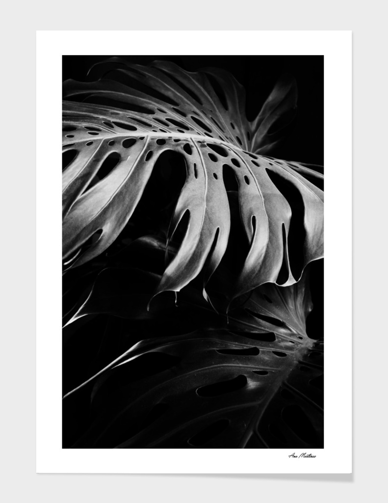 Monstera black
