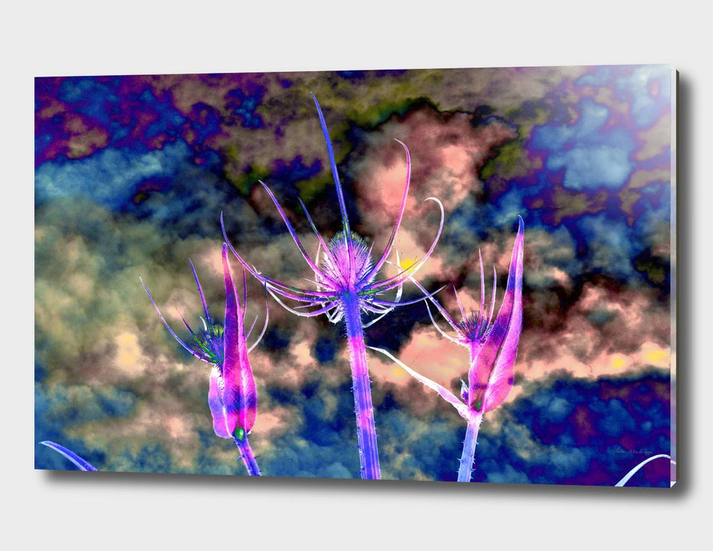 Floral cloud drama