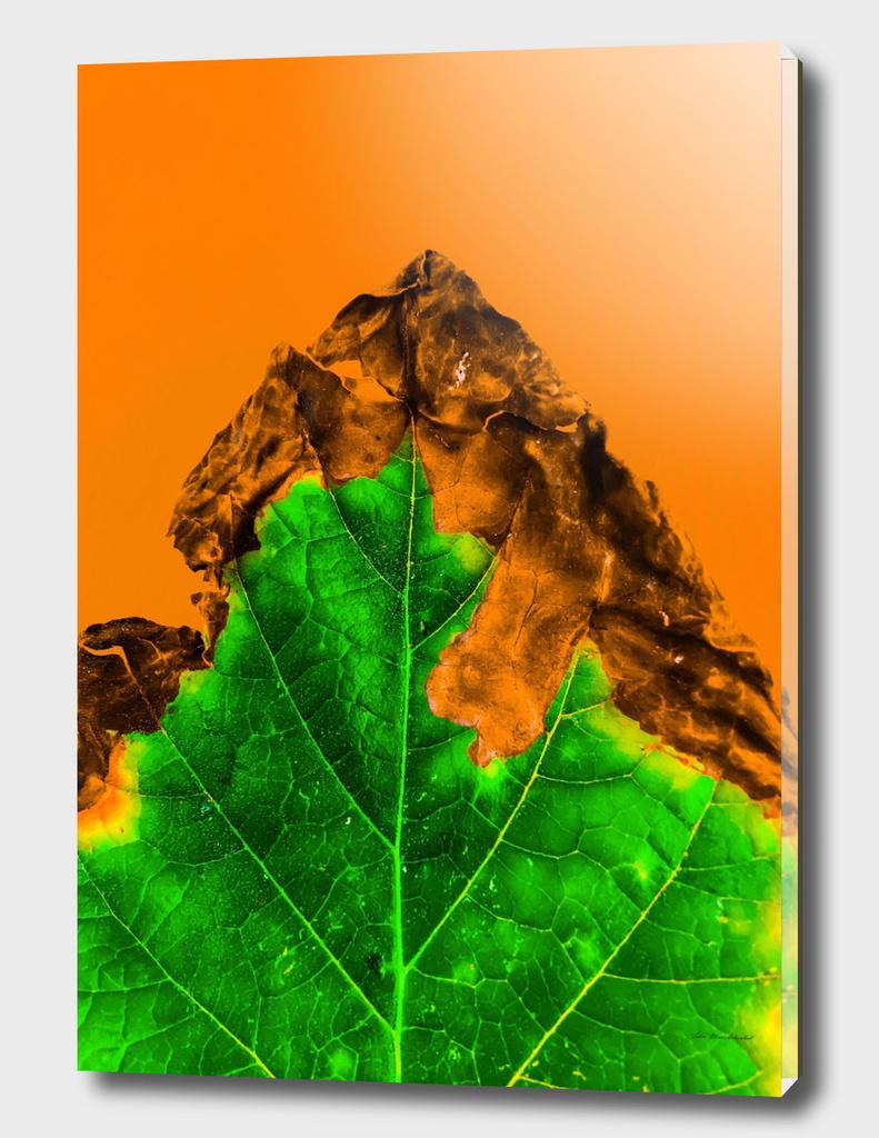 close up burning green leaf texture with orange background