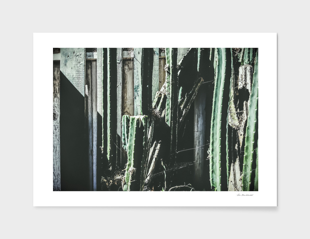 green cactus with white and green wood background