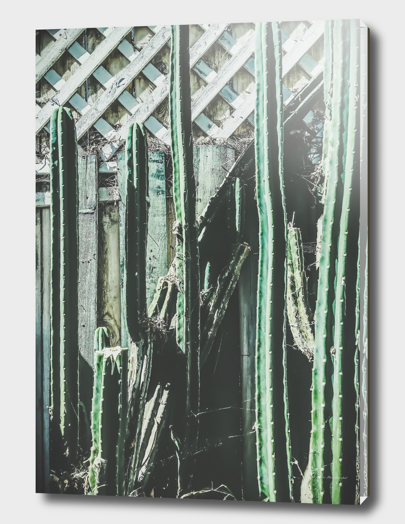 cactus with green and white wooden fence background