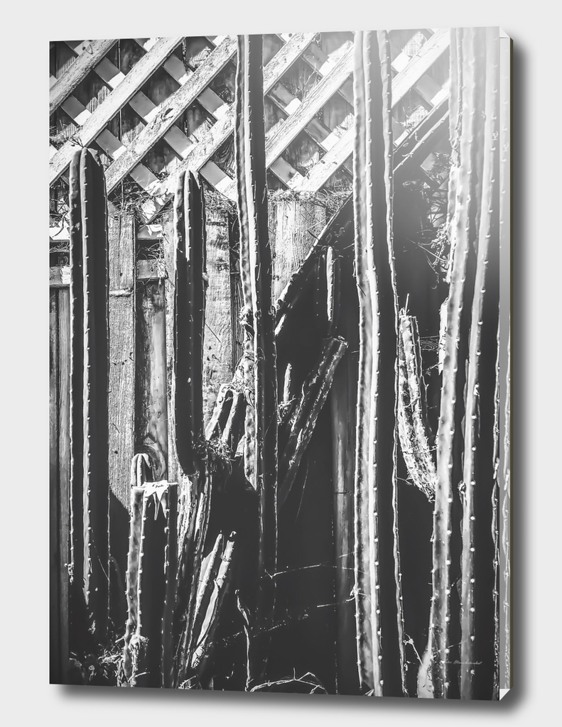 cactus with wooden fence in black and white