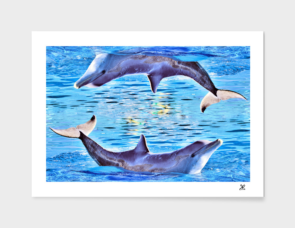 Dolphins, dolphins, dolphins.