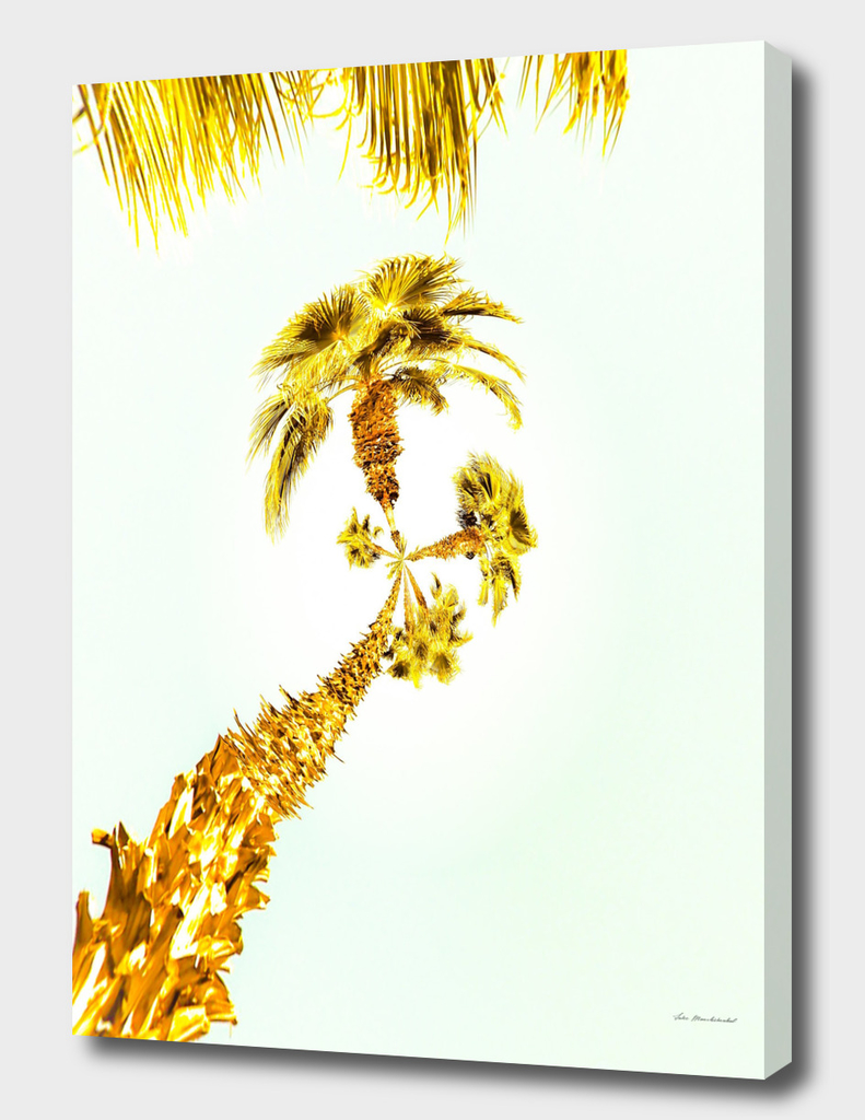 palm trees with the summer sky background