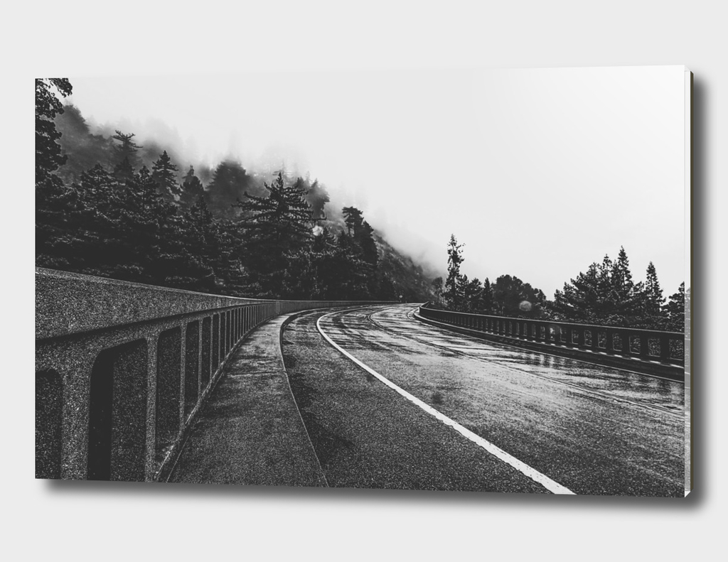 bridge in the forest in black and white