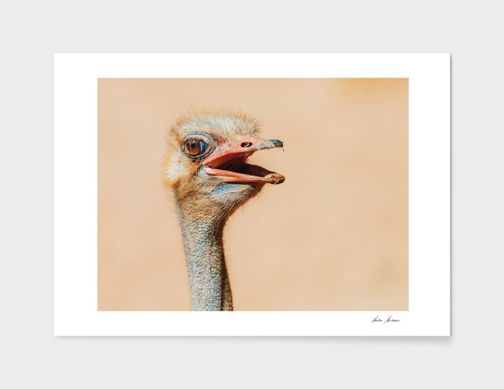 Funny Ostrich Bird Portrait