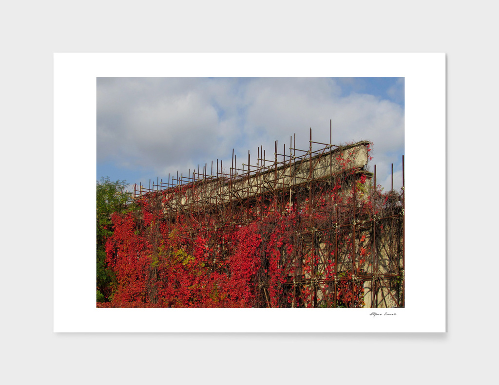 scaffolding abandoned in the city - red ivy